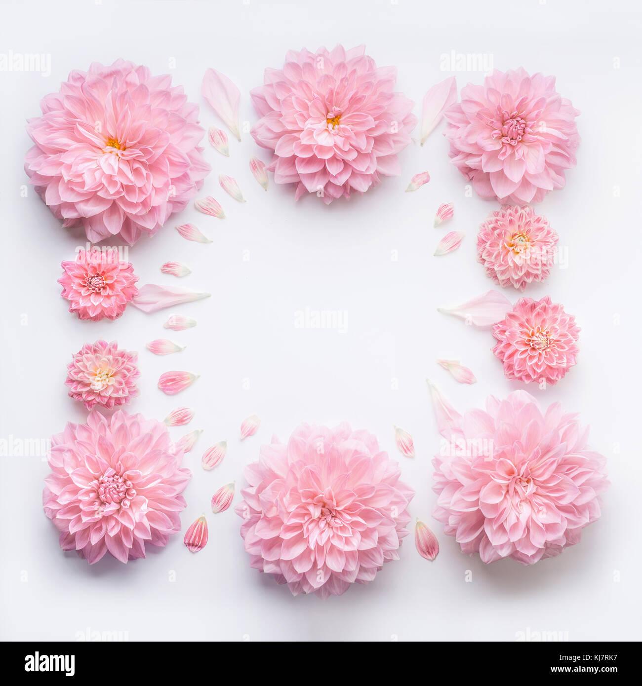 Telaio Di Rosa Pallido Fiori Con Petali Di Colore Bianco Su Sfondo