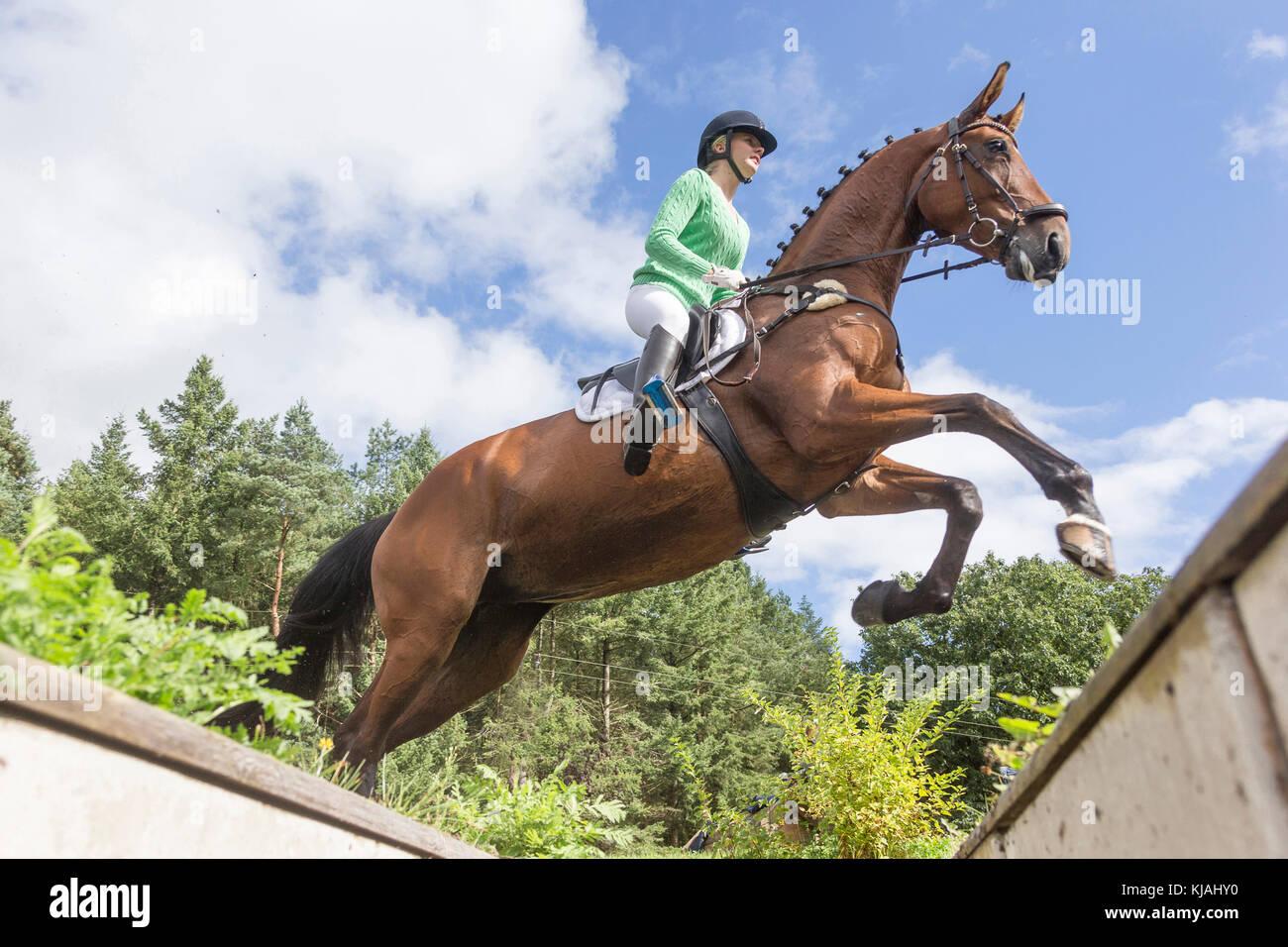 Hanoverian cavallo. Rider superare un ostacolo durante un cross-country ride, visto dal di sotto. Germania Immagini Stock
