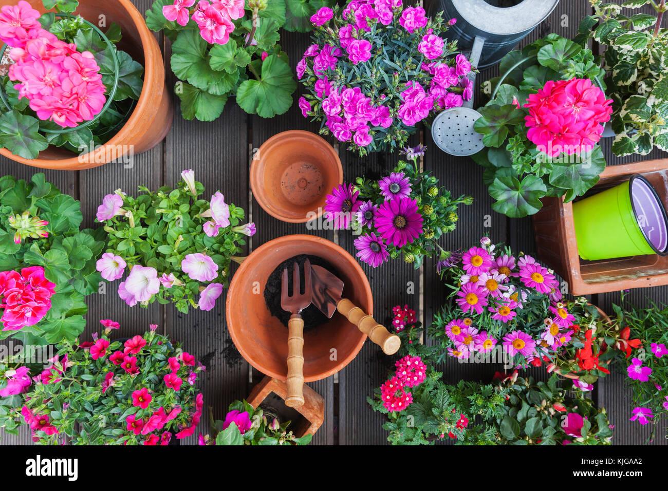 Varie rosa in fiore piante in vaso sul terrazzo Foto & Immagine ...