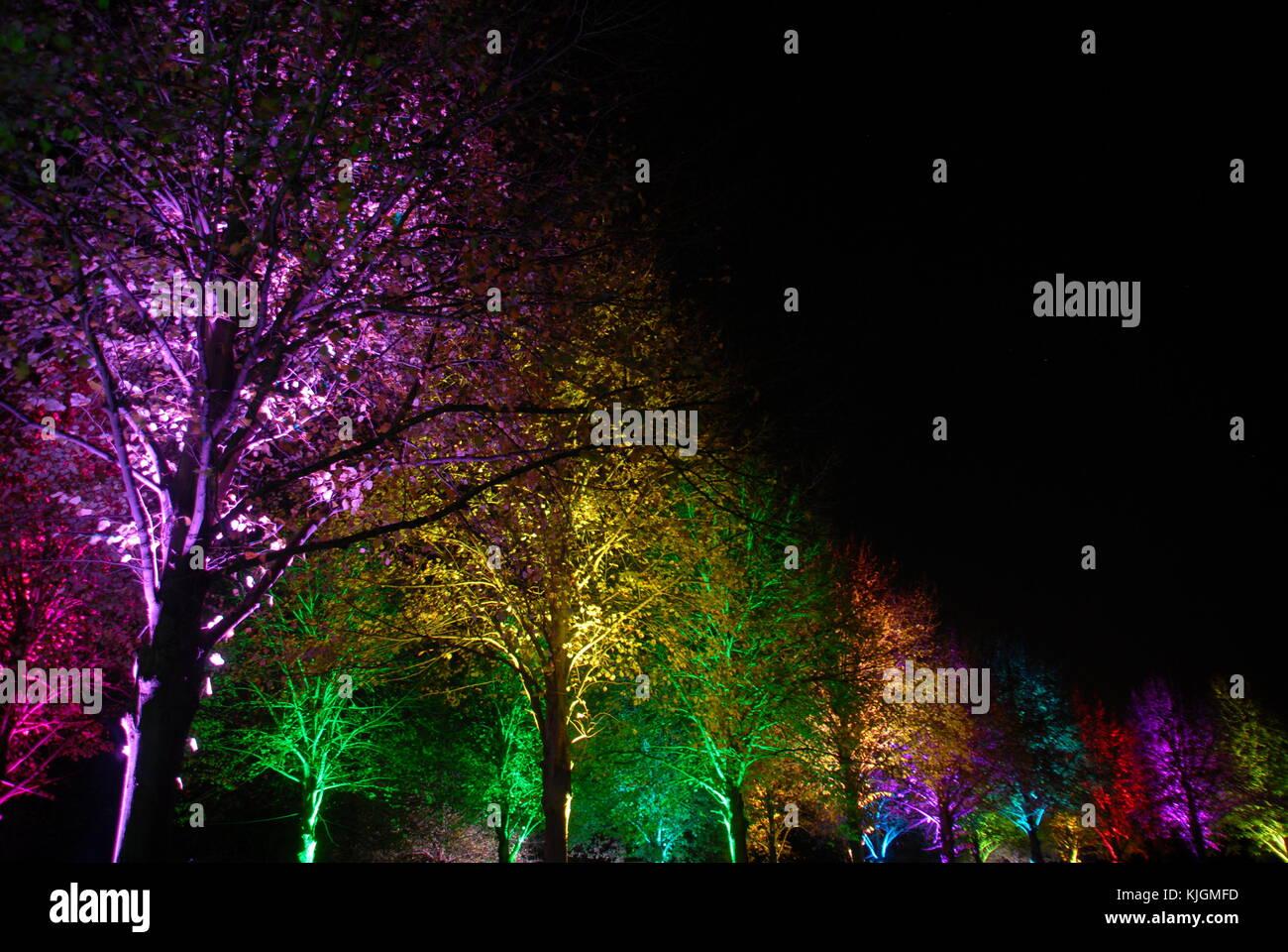 Magic colorati alberi illuminati di notte (viola,giallo,verde,rosso,turquise) Immagini Stock