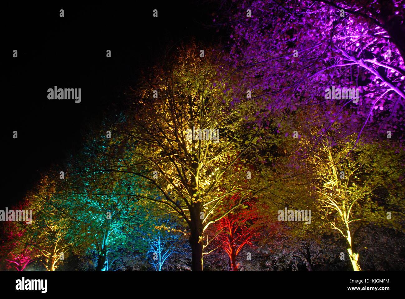 Magic colorati alberi illuminati di notte (viola,giallo,rosso,turquise,blu) Immagini Stock