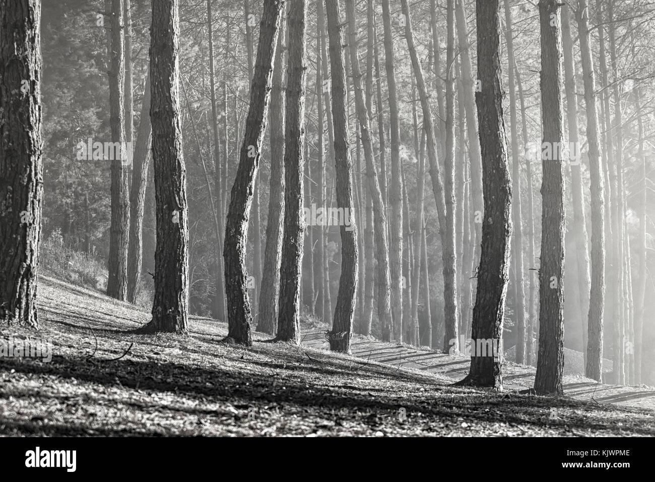 Legno Bianco E Nero : Texture albero bianco e nero foto gratis su pixabay
