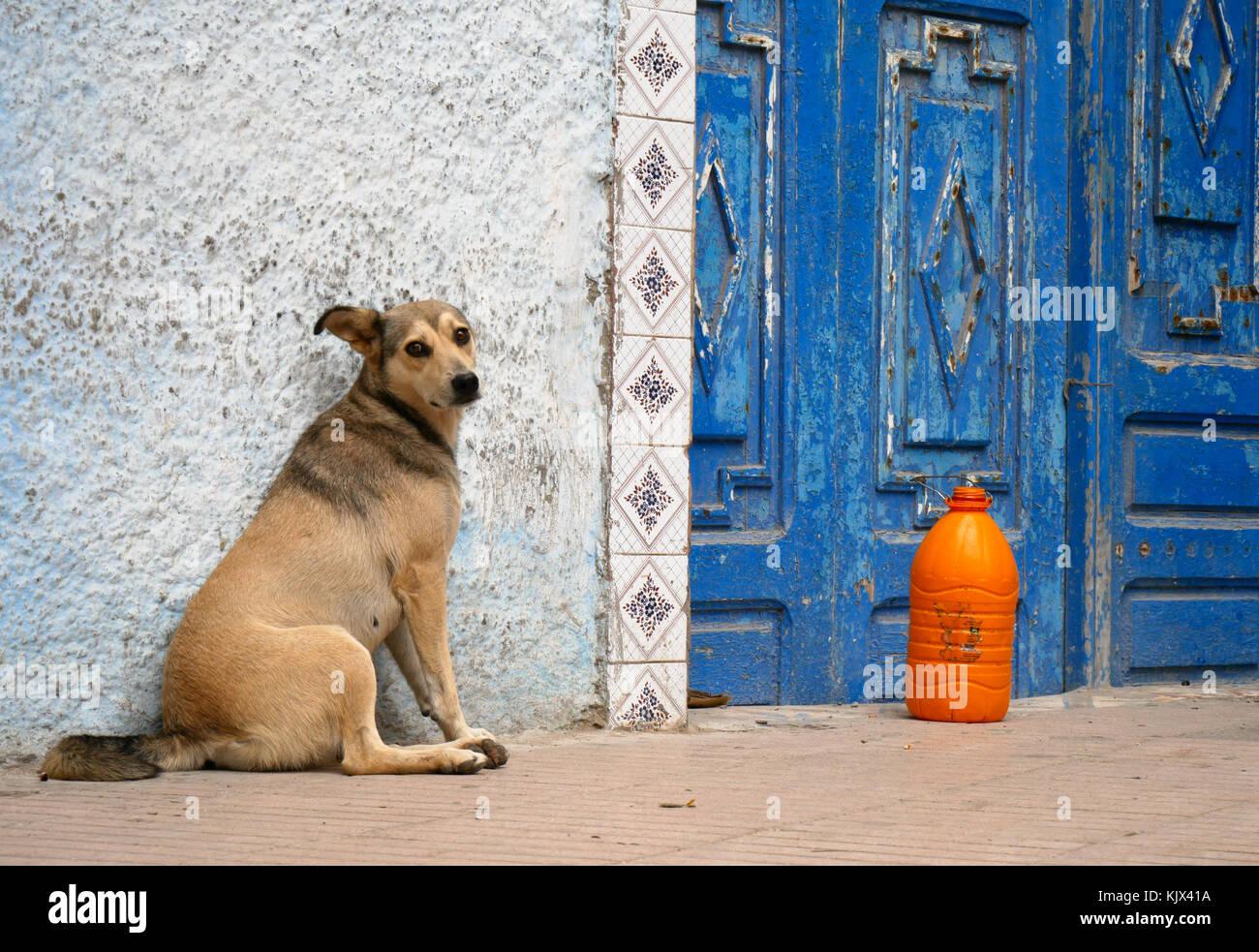 Dog sitter accanto alla porta blu Immagini Stock