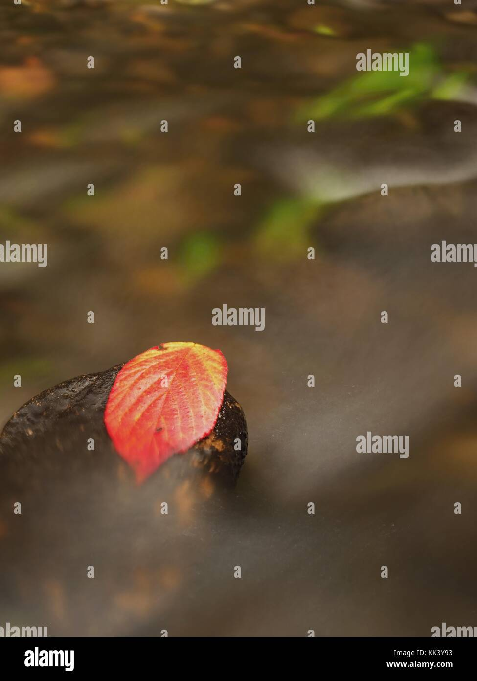 Spinoso di foglia di lampone catturati sulla roccia umida. A lascia intrappolati nel bel mezzo di un torrente di Immagini Stock