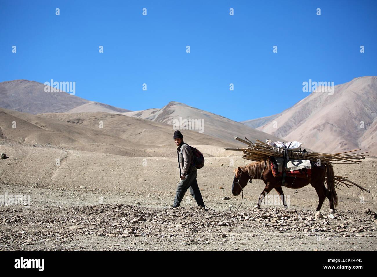 Uomo locale con un mulo - il modo tradizionale di trasporto, Ladakh, Jammu e Kashmir in India. Immagini Stock