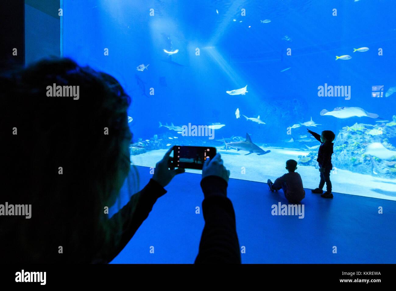 Madre scattare foto ai figli guardando i pesci, l'acquario di den bla pianeta, kastrup, Copenhagen, Danimarca Immagini Stock