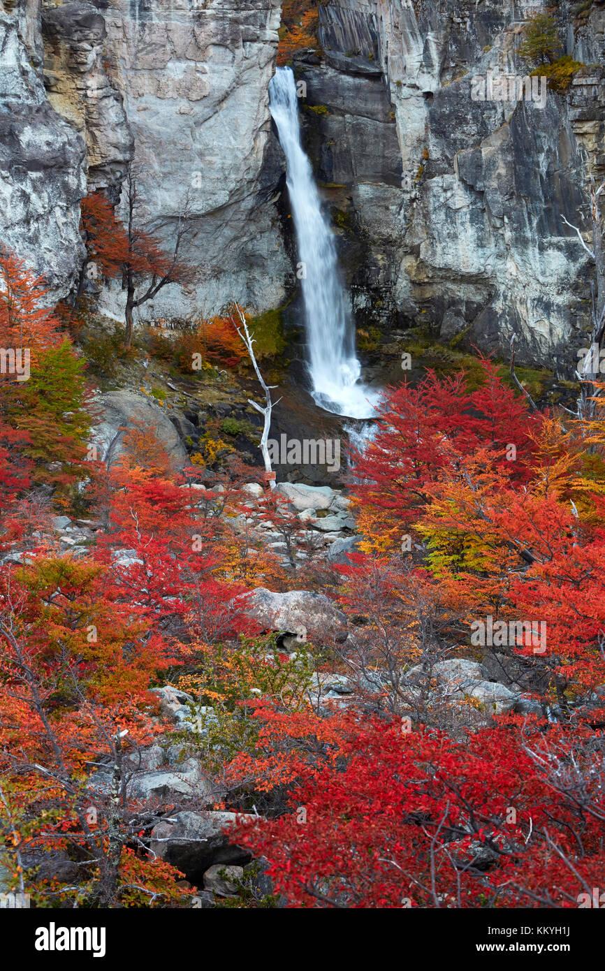 El chorrillo cascata e lenga alberi in autunno, nei pressi di El Chalten, Parque Nacional Los Glaciares, Patagonia, Immagini Stock