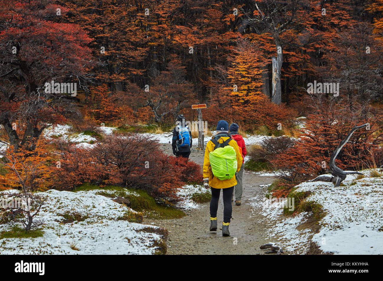 Gli escursionisti, neve e lenga foresta sulla pista di laguna de los Tres, Parque Nacional Los Glaciares (area del Foto Stock