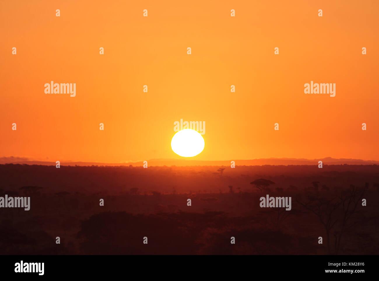 Serengeti sunrise, Tanzania Africa Foto Stock