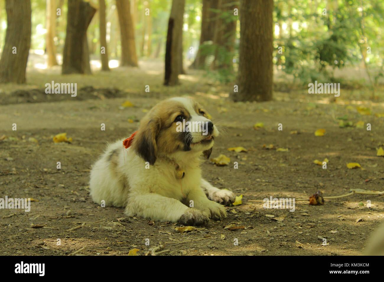 Un Piccolo Cane Nella Giungla Questo Cane Seduto Vicino A Me A