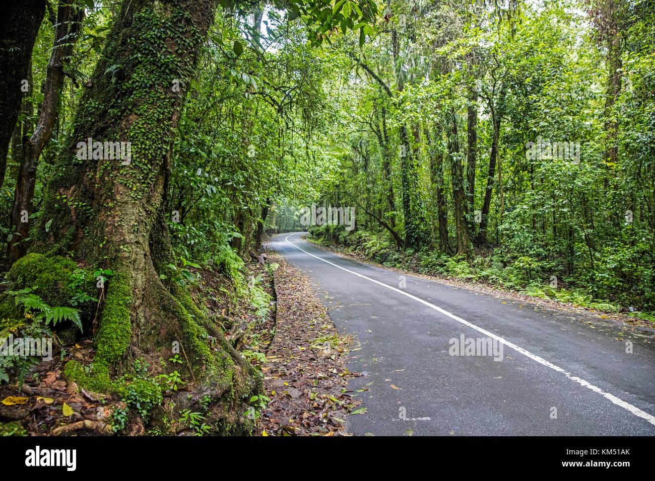 Tortuosa strada attraverso la foresta pluviale tropicale sulle pendici del monte rinjani, vulcano attivo sull'Isola Foto Stock
