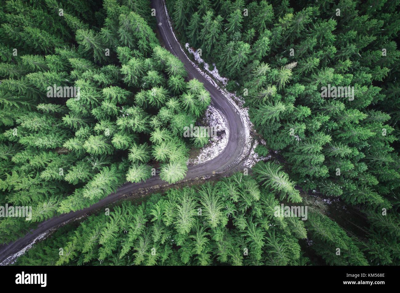 Strada vuota in una foresta da un drone Immagini Stock