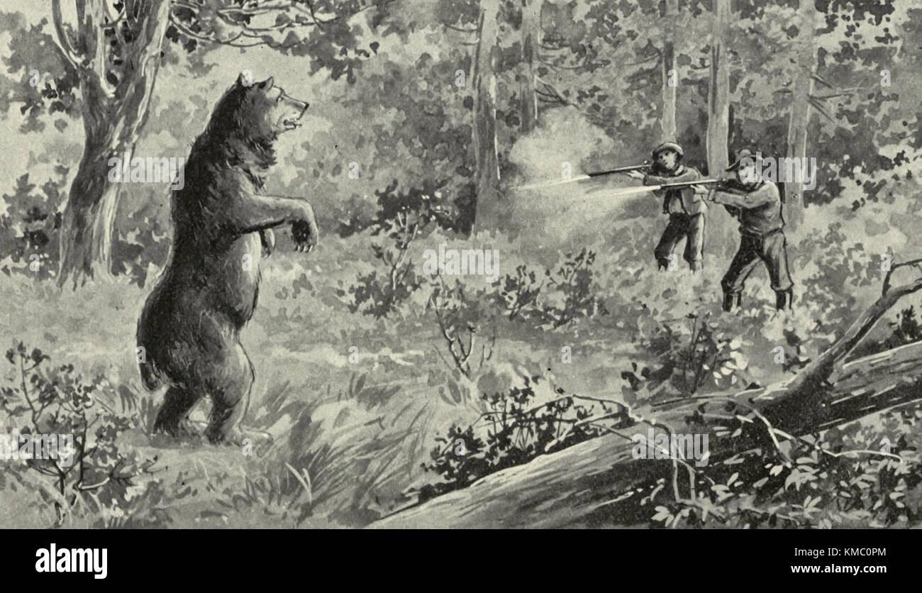 Bear Bruin presso la baia, circa 1880 Immagini Stock
