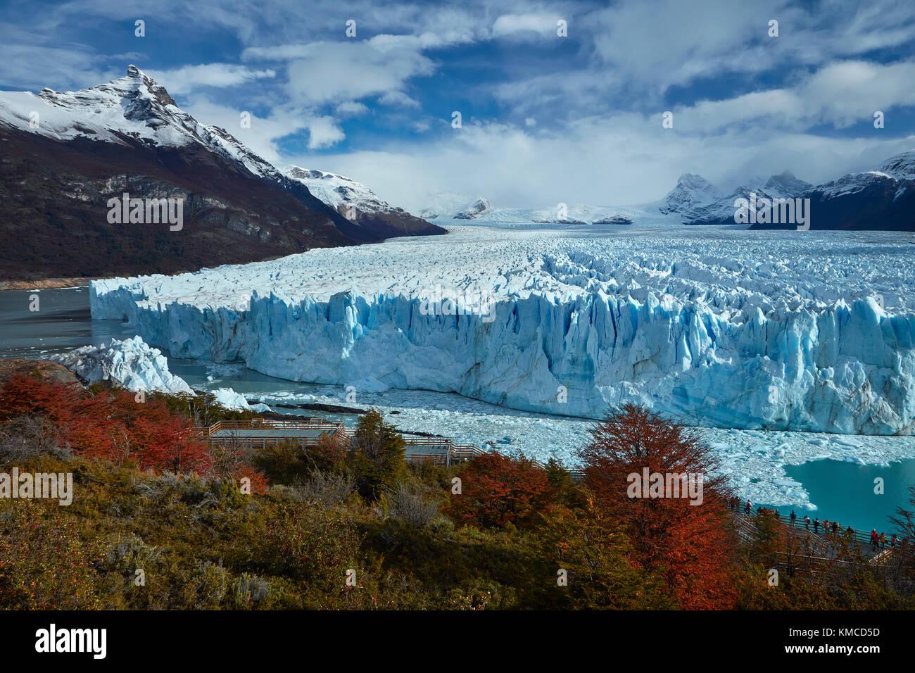 Ghiacciaio Perito Moreno, lenga alberi in autunno, e turisti sul marciapiede, Parque Nacional Los Glaciares (area Immagini Stock