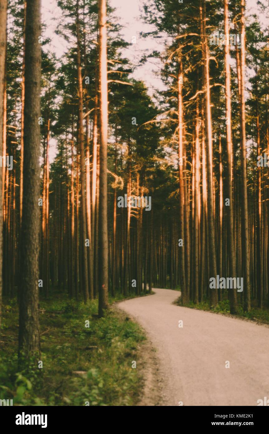 Strada per la foresta. Immagini Stock
