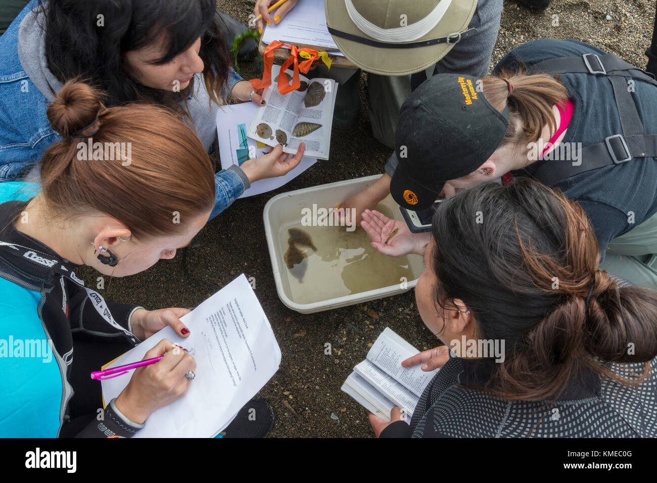 Le zone umide ecologia classe,san francisco state university,tiberon,ca.gli studenti hanno usato una sciabica per Immagini Stock