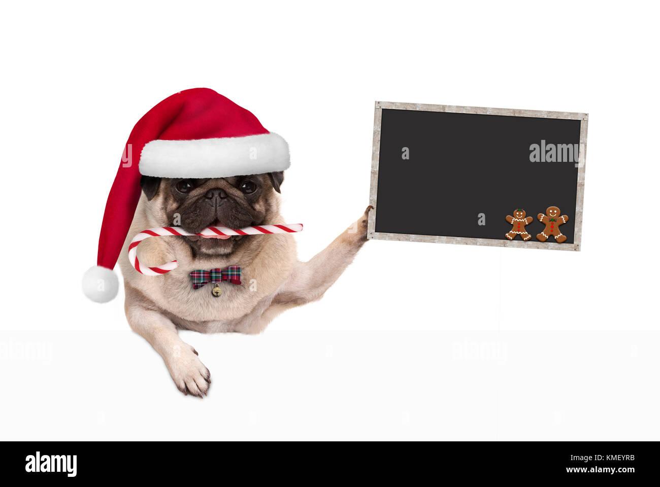 Babbo Natale Zampa.Carino Il Natale Pug Cane Con Santa Hat E Candy Cane Tenendo