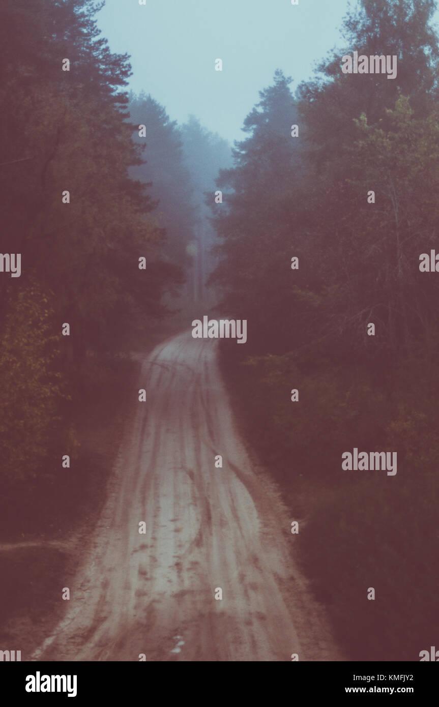 Nebbiosa mattina d'estate. Un lungo viaggio attraverso la foresta. La lettonia. Immagini Stock