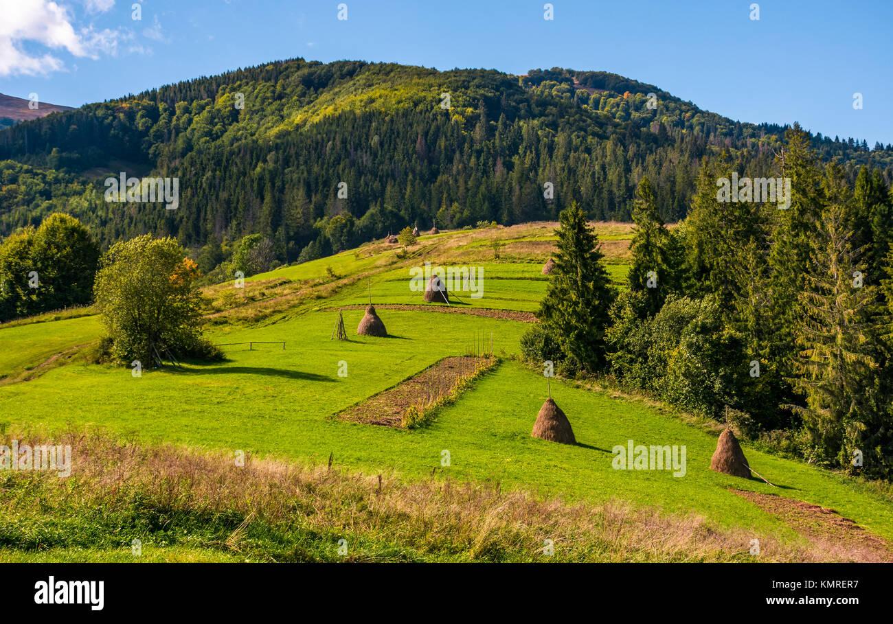 Haystacks On Grassy Sapere Nelle Belle Giornate Estive Splendido