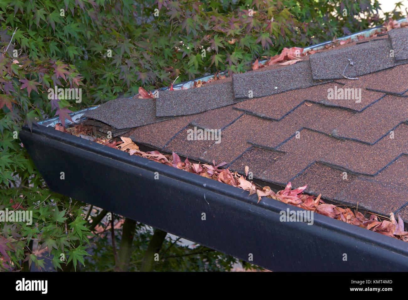 Grondaie sulla ghiaia tetto senza protezioni di gronda, intasato con foglie da alberi. Aumento del rischio di intasamento Immagini Stock