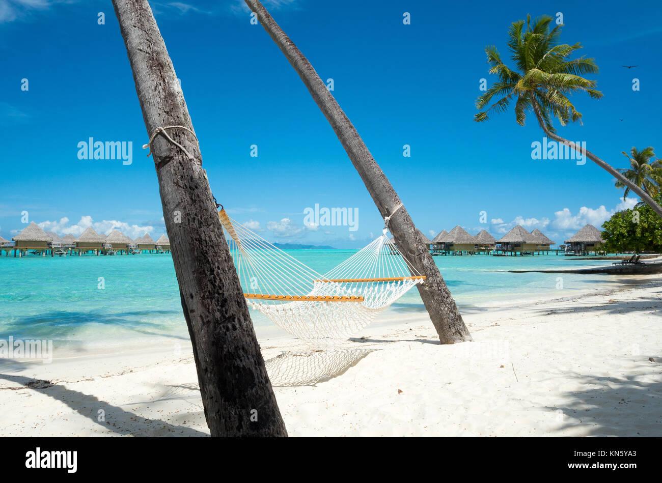 Un amaca sospesa tra due palme offre ampio relax per gli ospiti presso l'Intercontinental Le Moana Resort Bora Immagini Stock