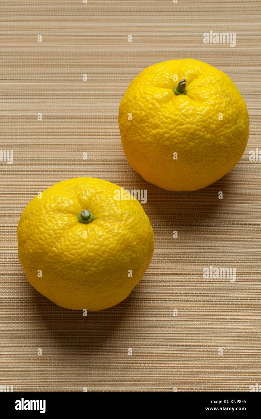 Coppia di giallo fresco giapponese Yuzu frutto Foto Stock