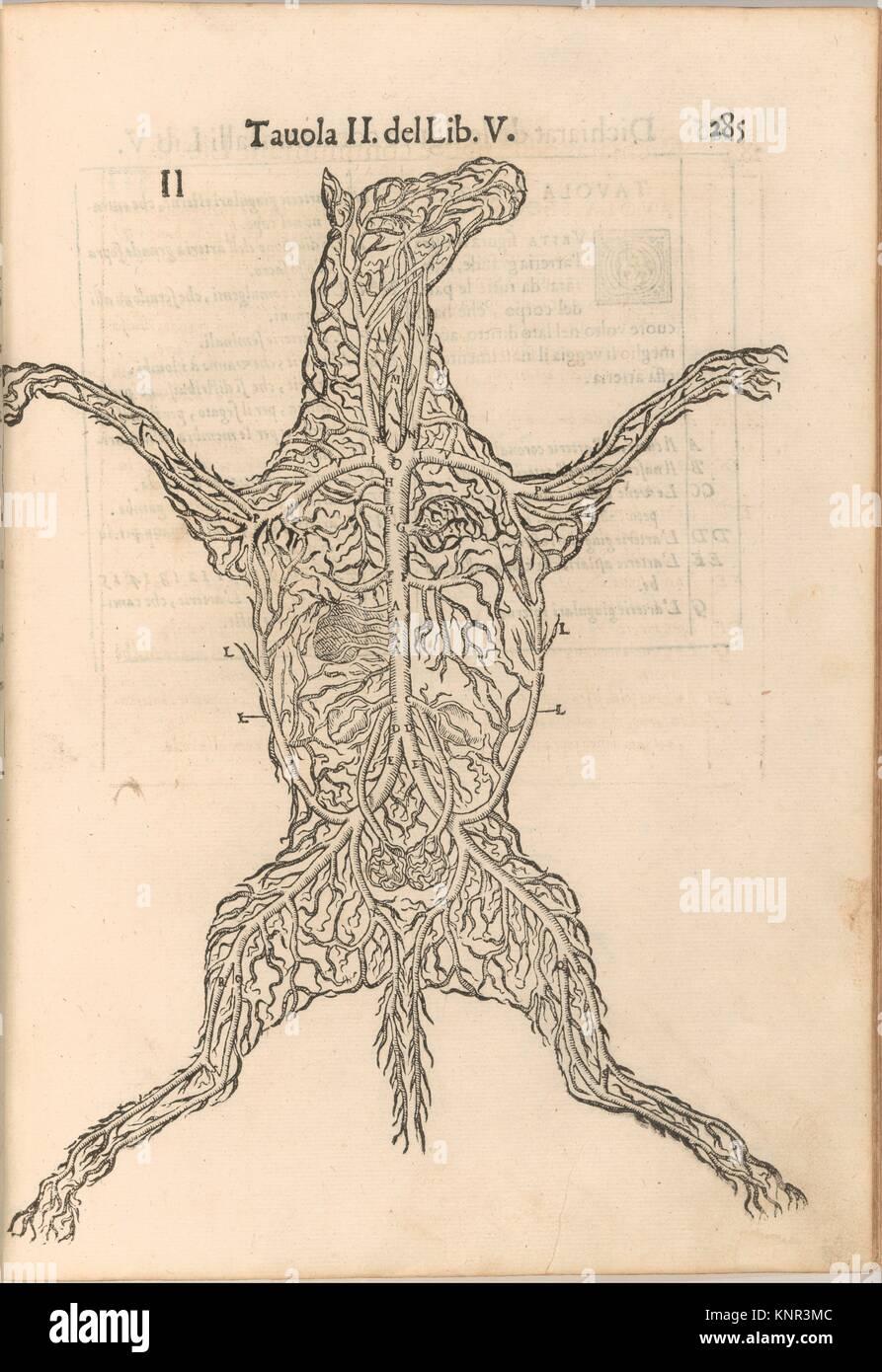 Anatomia del Cavallo. Infirmita del Cavallo. Autore: scritto da Carlo Ruini; stampante: stampato da A. Bindoni il Immagini Stock