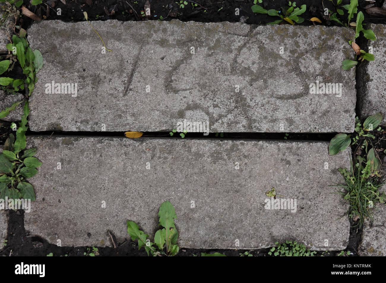 Piastrelle Verdi Per Esterno : Modello di quadrati di pavimento di cemento piastrelle con erba