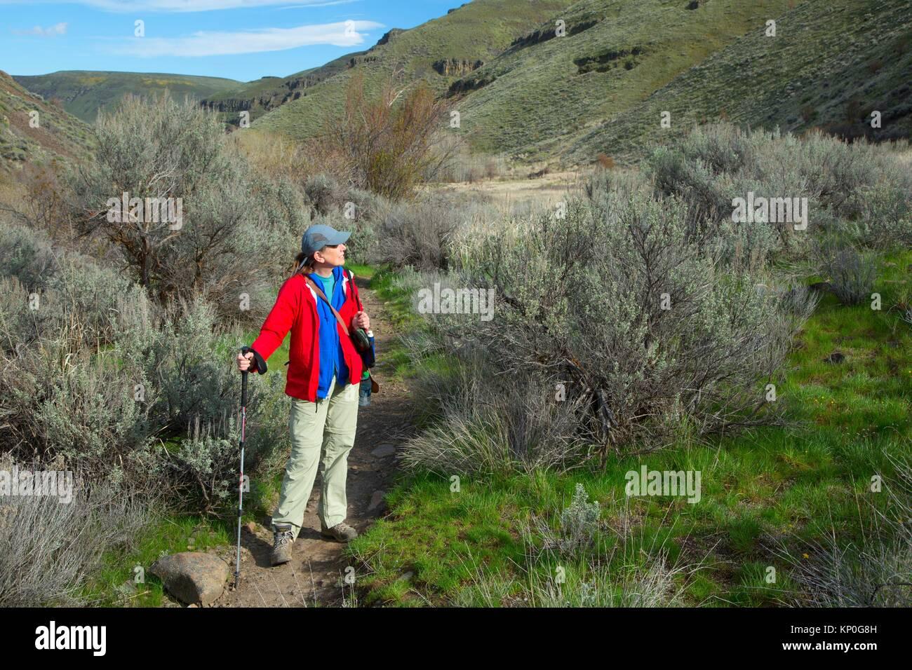 Umtanum Creek Trail, Yakima River Canyon Scenic e di attività ricreative autostrada, Wenas membro Area faunistica, Immagini Stock