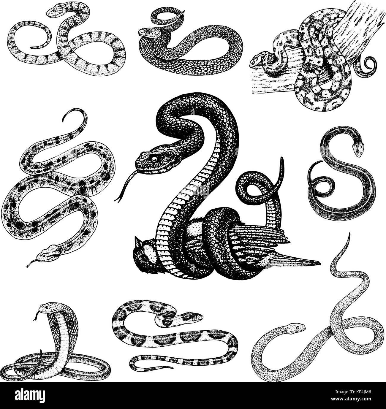 Forasteiro Tattoo Tattoo Serpente: Impostare Viper Snake. Serpente Cobra E Python, Anaconda O