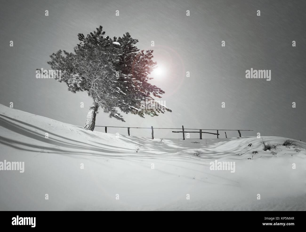 Albero Su Una Collina Ricoperta Di Neve Durante Una Nevicata In