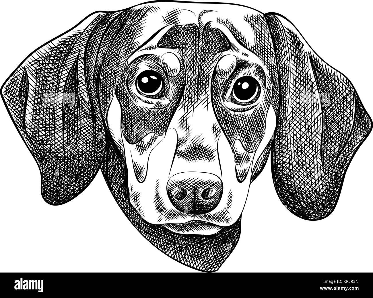 Illustrazione Vettoriale Di Un Cane Bassotto Per Un Biglietto Di
