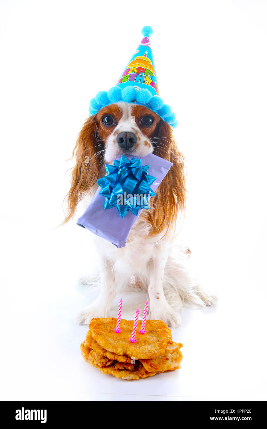 Buon Compleanno Cane Foto Cavalier King Charles Spaniel Cucciolo Di