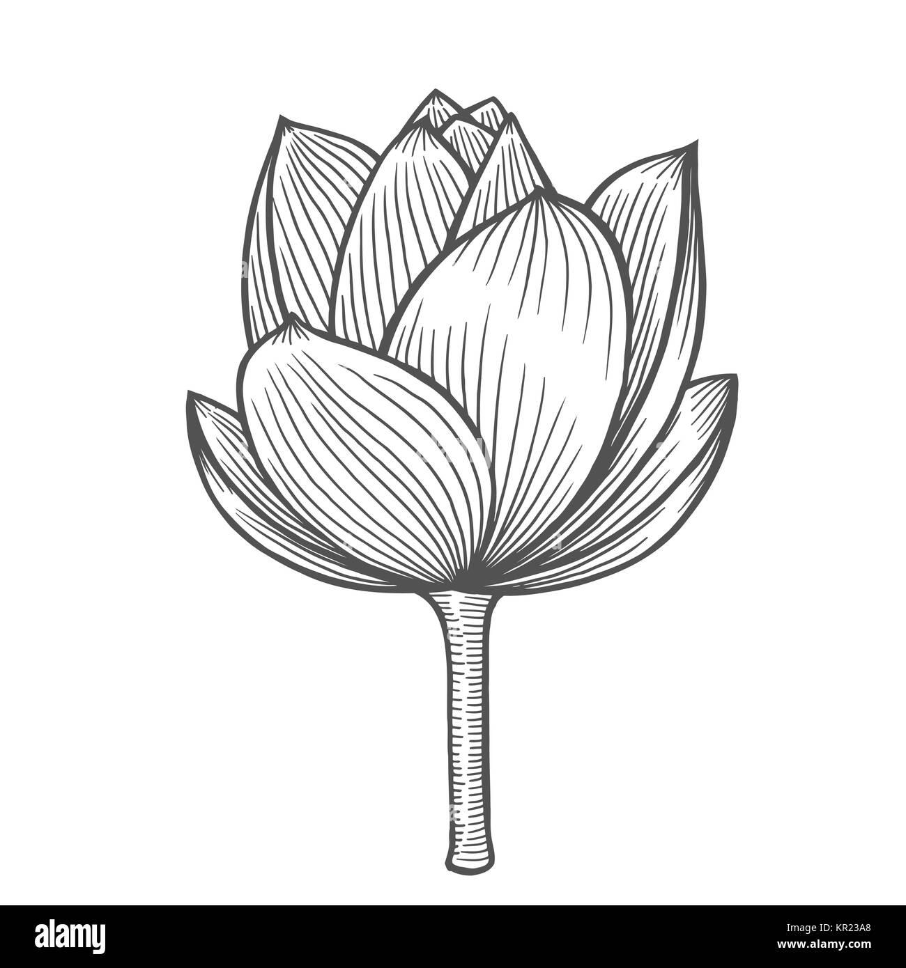 Fiore Di Loto Illustrazione Modello Di Linea Illustrazioni