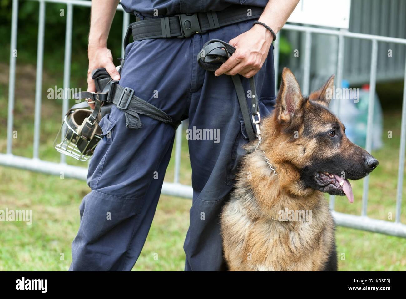 Cane Di Polizia Poliziotto Con Un Pastore Tedesco Sul Dazio Foto