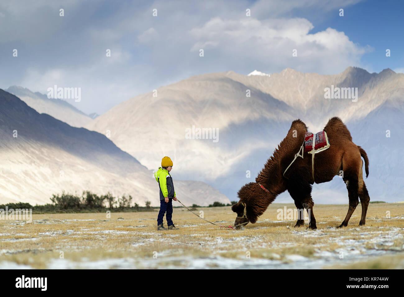 Giovane ragazzo occidentale in sella doppia gobba di cammello e attraversando il deserto nella Valle di Nubra, Ladakh, Immagini Stock