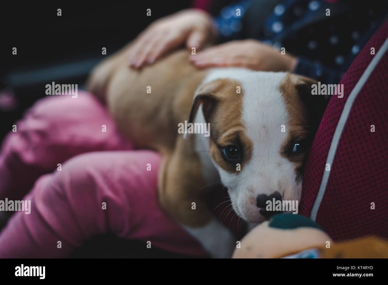 Un bimbo tenendo un nuovo cucciolo. Immagini Stock