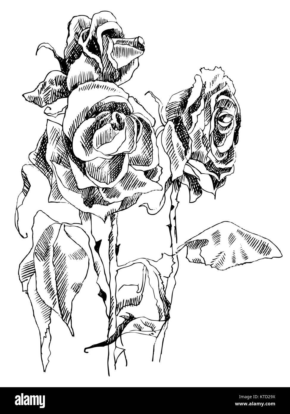 Un Disegno Di Rosa Appassita Foto In Bianco E Nero Illustrazione