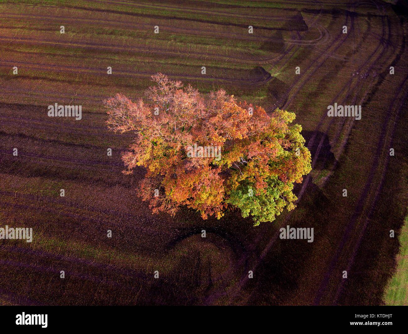 Bunte Felder im Herbst; Landsberieder, farbenfrohe Buche, einzelner Baum auf dem Feld, gedüngtes Feld, Odel, Immagini Stock