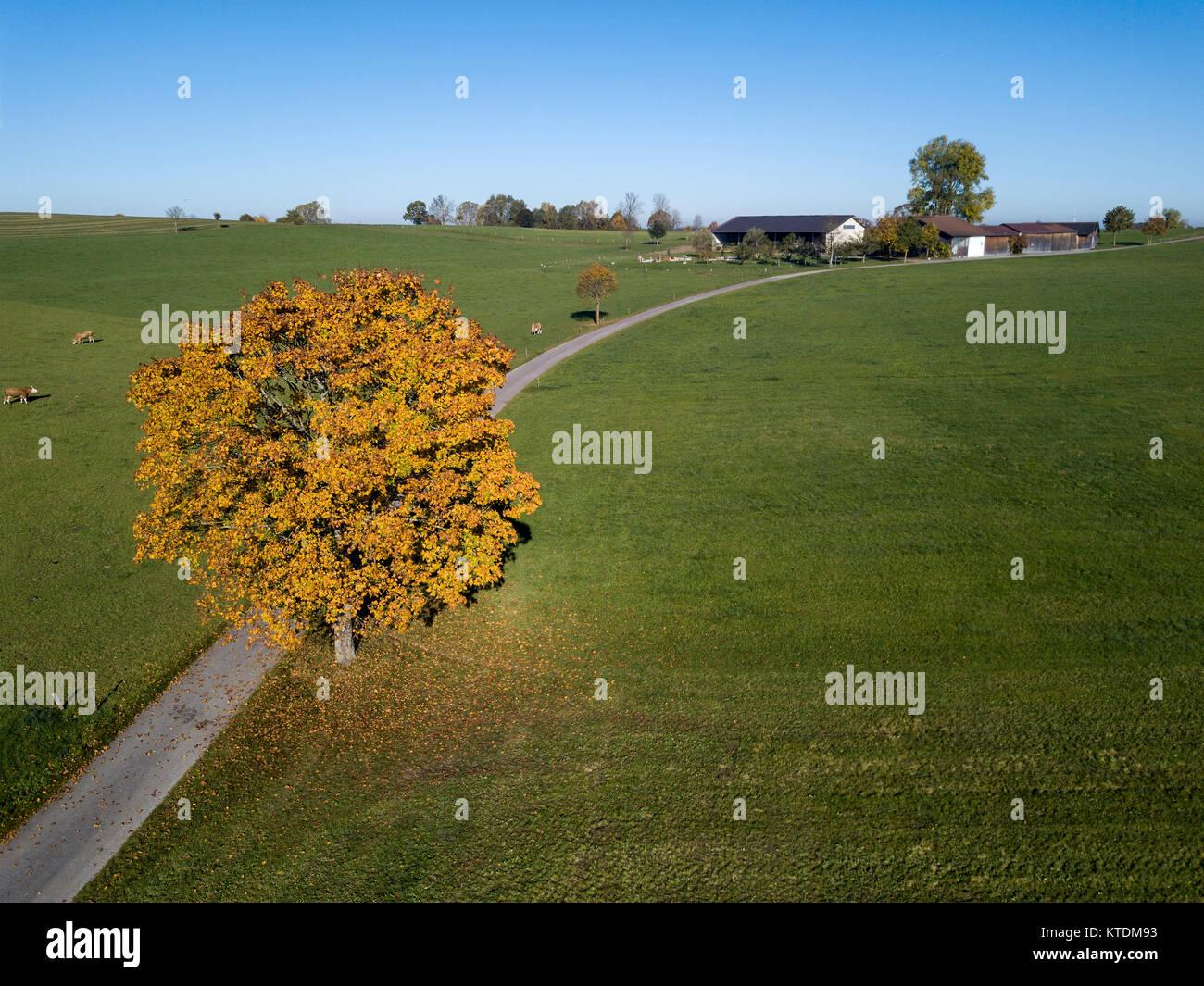 Deutschland, Bayern, Oberbayern, Landsberied, Aussiedlerhof, Landwirtschaft, Bauernhof, Landleben, Herbst, Bäume Immagini Stock