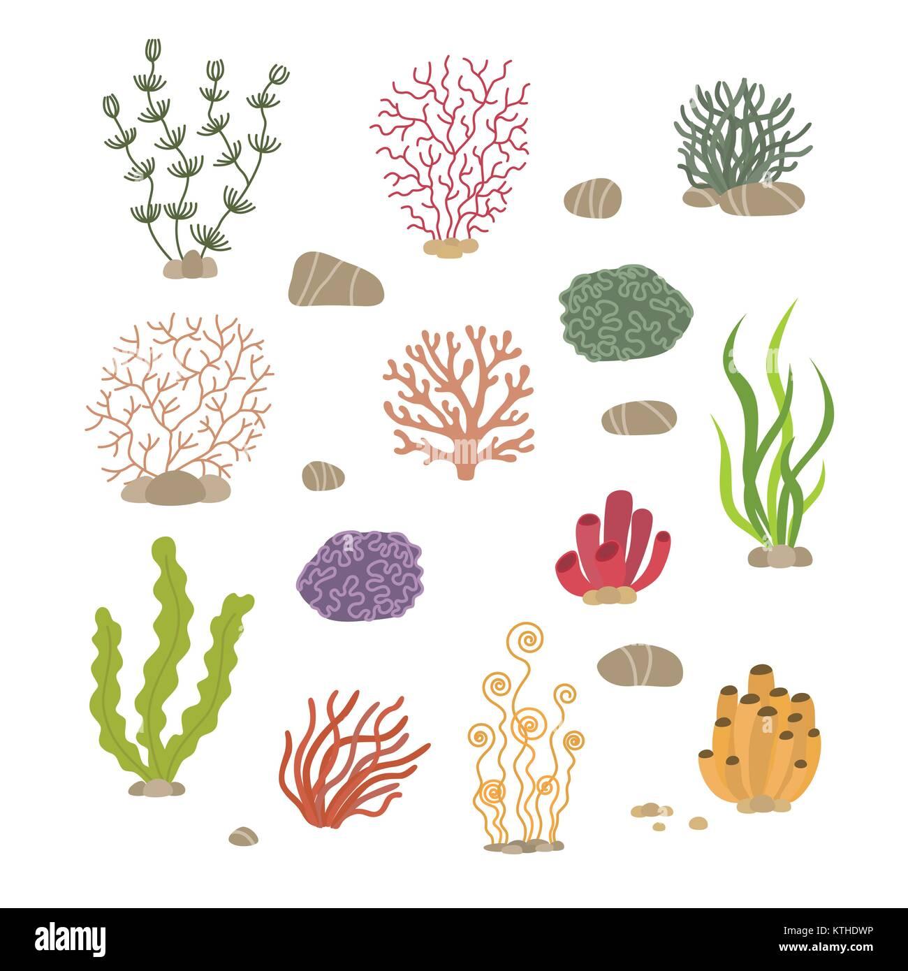 Le Alghe Coralli E Pietre Subacquea Piante Naturali Isolati