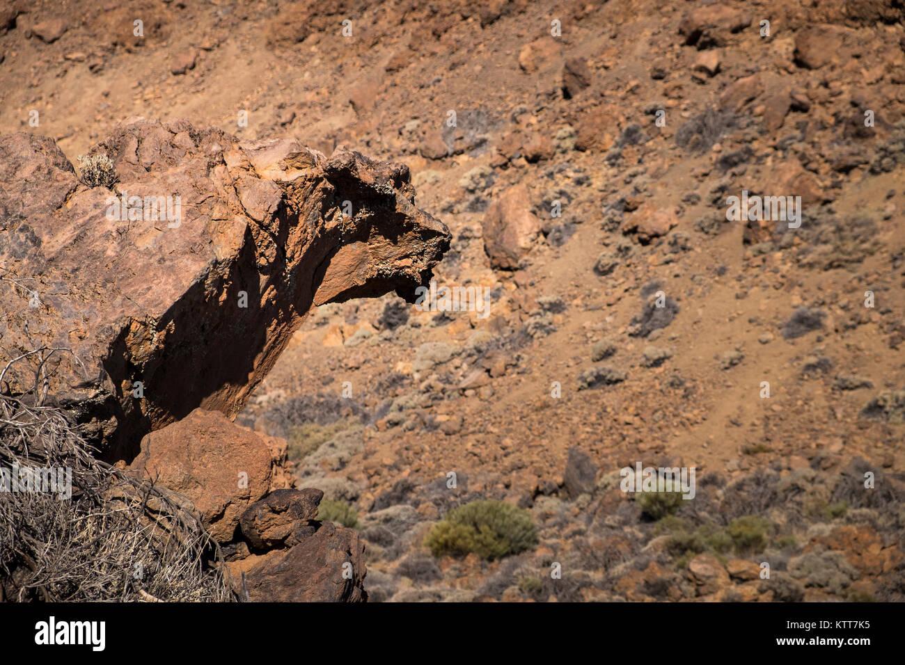 La roccia vulcanica appare come una forma animale, Las Canadas del Teide, Parco Nazionale, Tenerife, Isole Canarie, Immagini Stock
