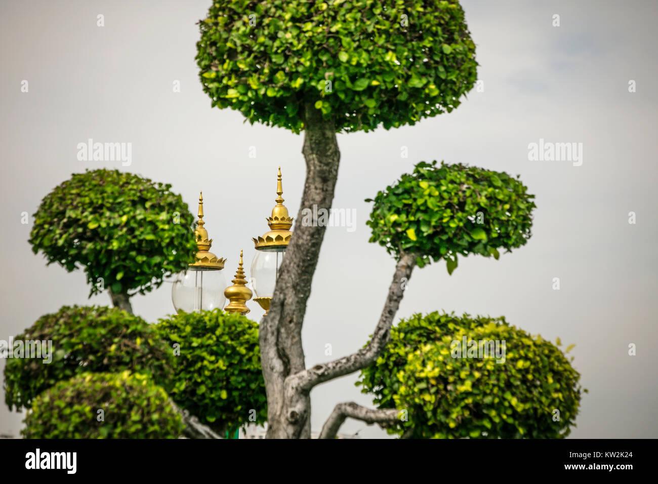 Alberi Ornamentali Da Giardino topiaria da alberi e luci ornamentali nei giardini a wat