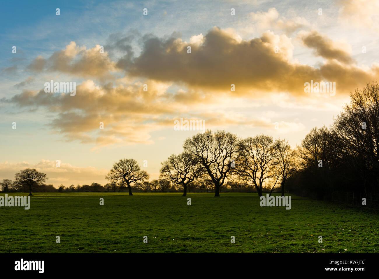 Inverno nel sole pomeridiano oltre il campo verde. Immagini Stock