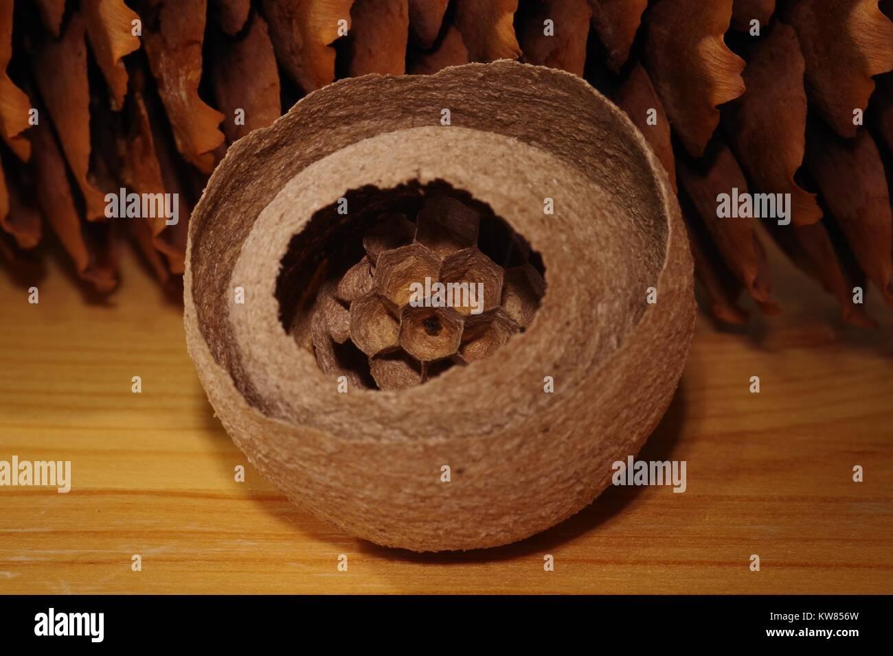 Sphere nest immagini sphere nest fotos stock alamy - Tipo di cesoie da giardino ...