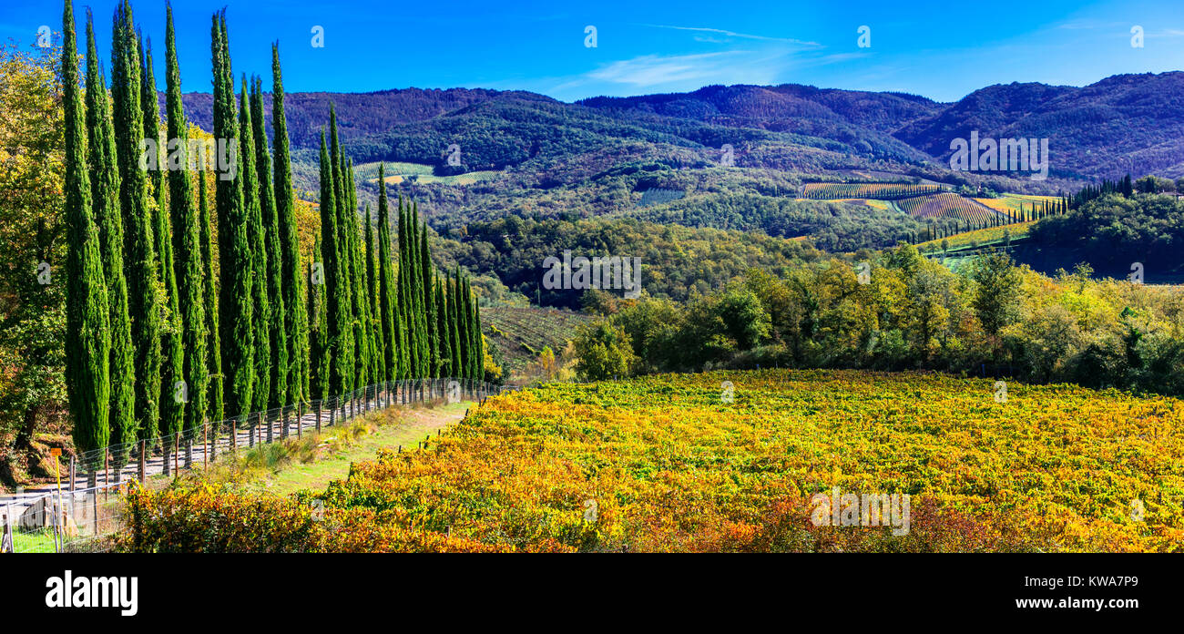 Impressionante paesaggio autunnale,vista con cipressi e vigneti ,Toscana,l'Italia. Immagini Stock