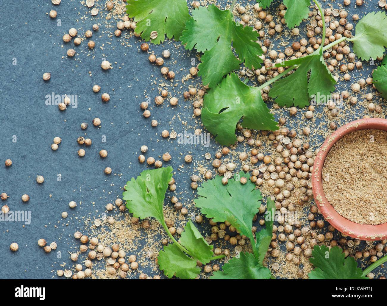 Coriandrum sativum. Semi di coriandolo, foglie e polvere sull'ardesia Immagini Stock