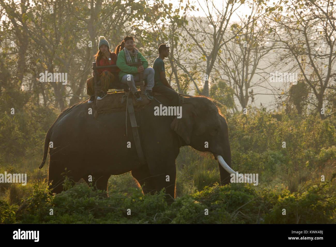 I turisti su elephant safari della giungla in Chitwan il parco nazionale, il Nepal Immagini Stock