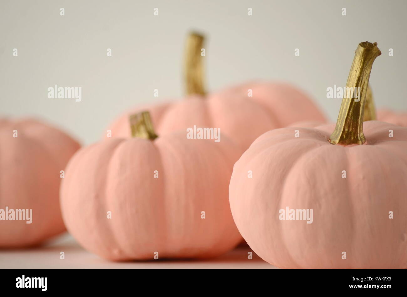 Rosa Pallido Zucche Con Oro Steli Su Un Colore Di Sfondo A Tinta