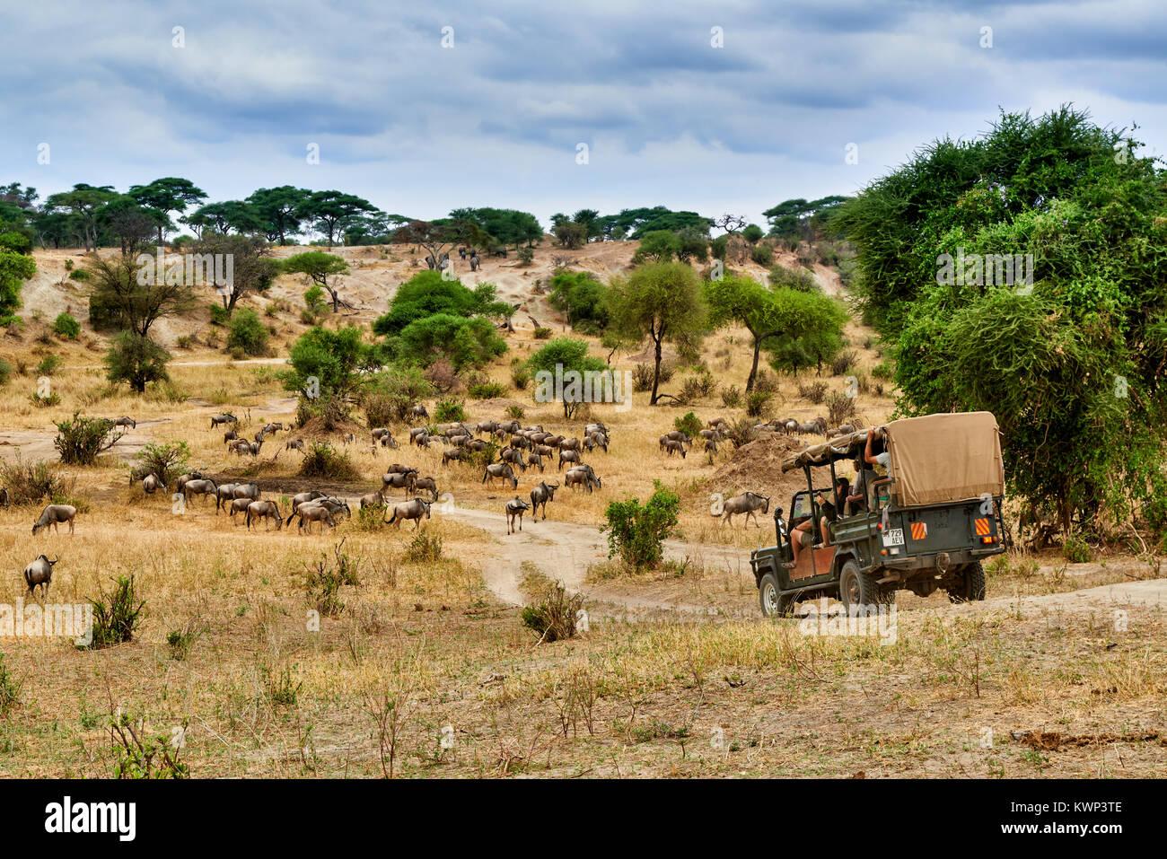 Blue gnu e safari auto nella valle del Parco Nazionale di Tarangire e, Tanzania Africa Immagini Stock